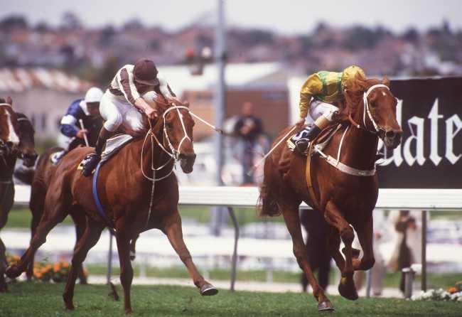 Best Horse Racing Events in New Zealand